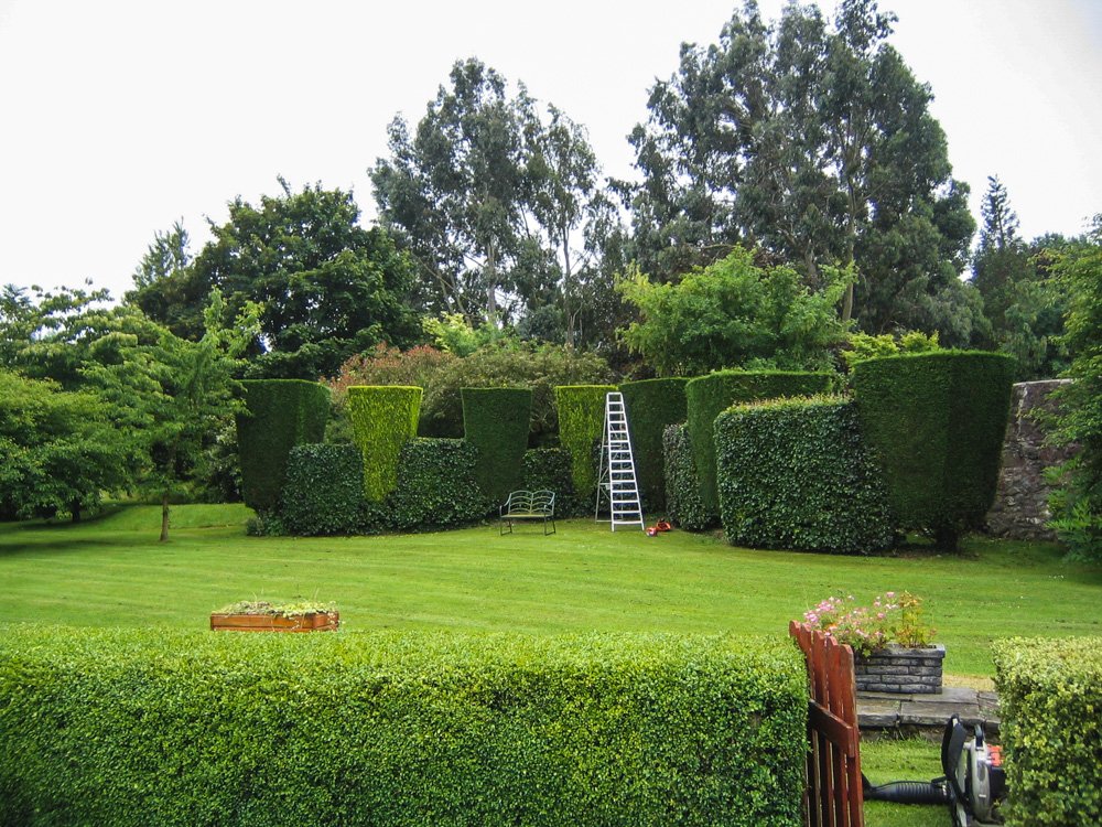 Example of hedge trimming.