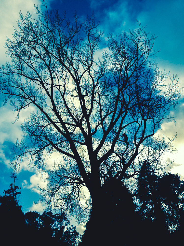 Reduction of Poplar