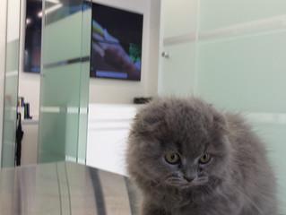 דף הדרכה לטיפול בגור החתולים החדש