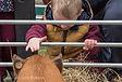 goat, stroke goat, fun farm