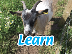 School learning farm