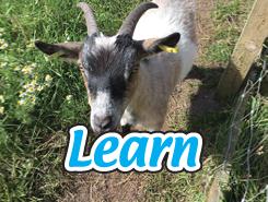 School learning farm