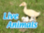 teaching farm with live animals