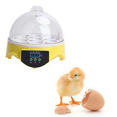 chick incubator hire schools