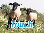 touch animals