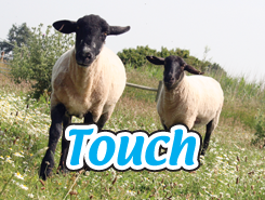 Mobile Farm touch animals