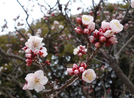 春を花粉から感じてしまう。