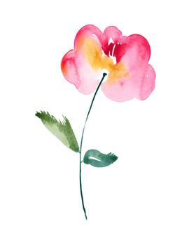 Vivid-Rose.jpg