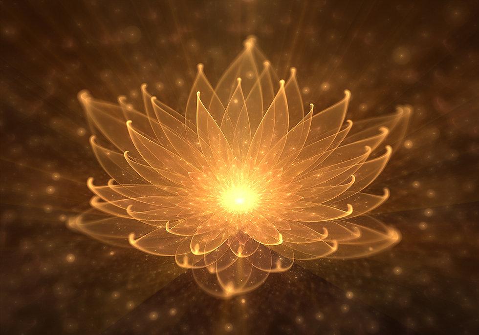 lotus-md.jpg