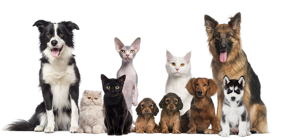 all-the-animals.jpg