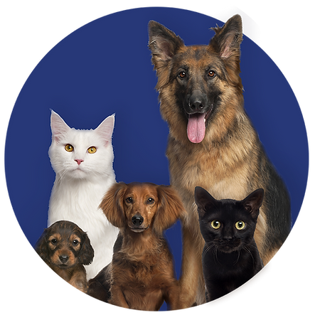 caras-house-home-pets-navy.png