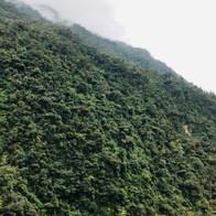 Rainforest Ecuador