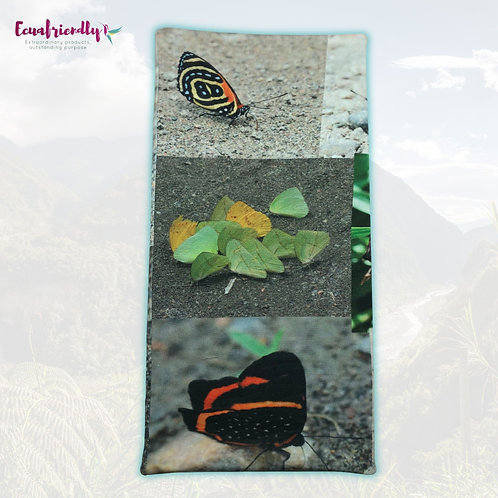 Butterflies of Ecuador