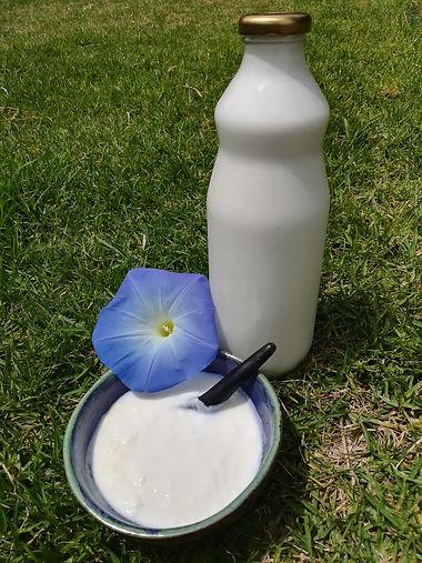 leche de vaco.jpeg