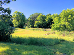 East looking view of back pasture