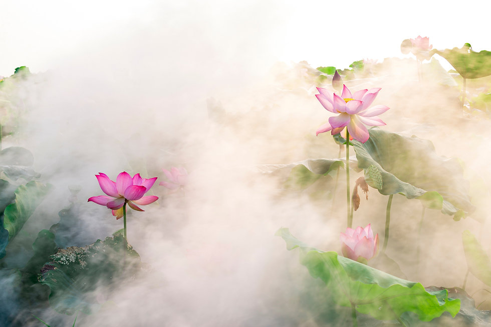 lotus flower blossom in the sunrise_edited.jpg
