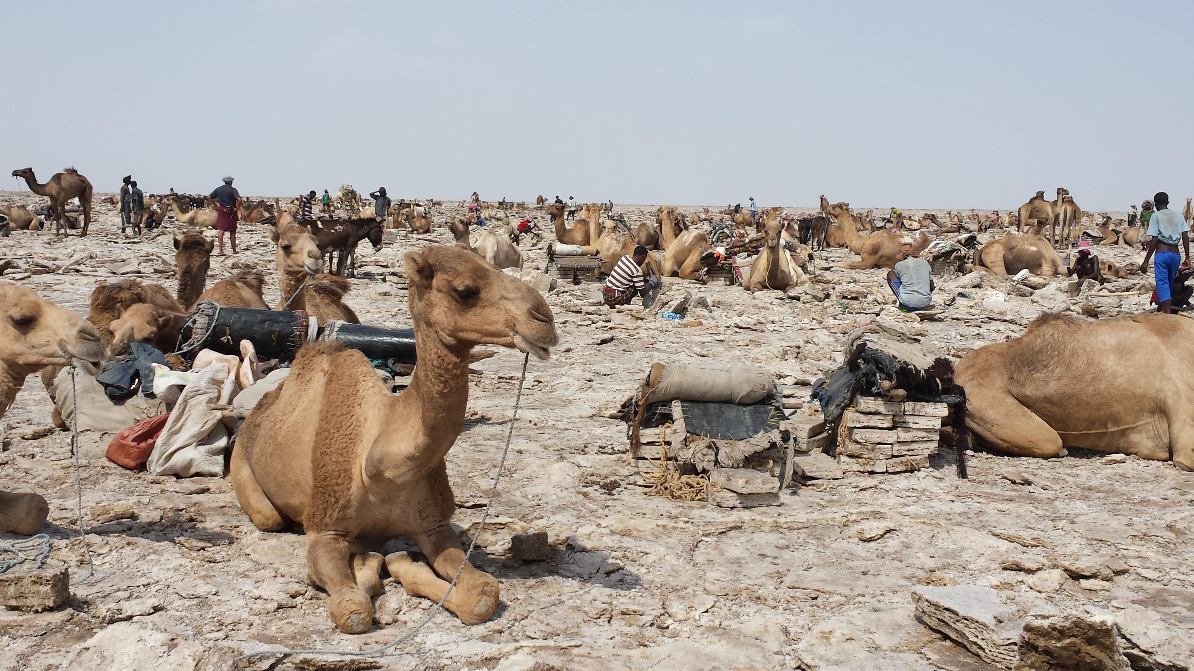 Ethiopie_désert_de_sel