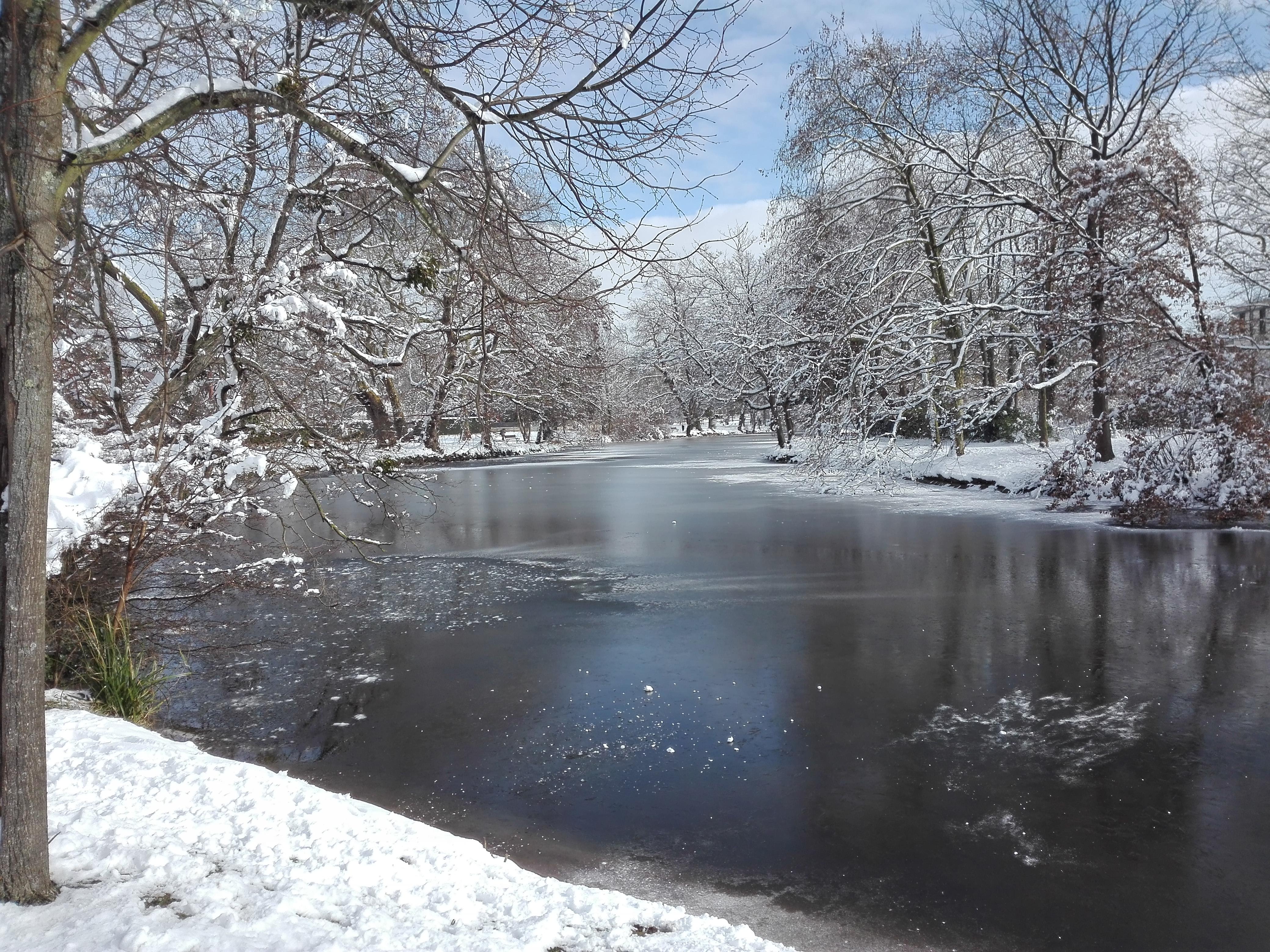 Les Ibis, sous la neige 02 2018