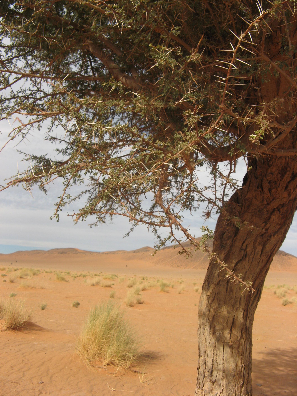 désert_marocain_9