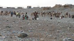Ethiopie chameaux et habitations