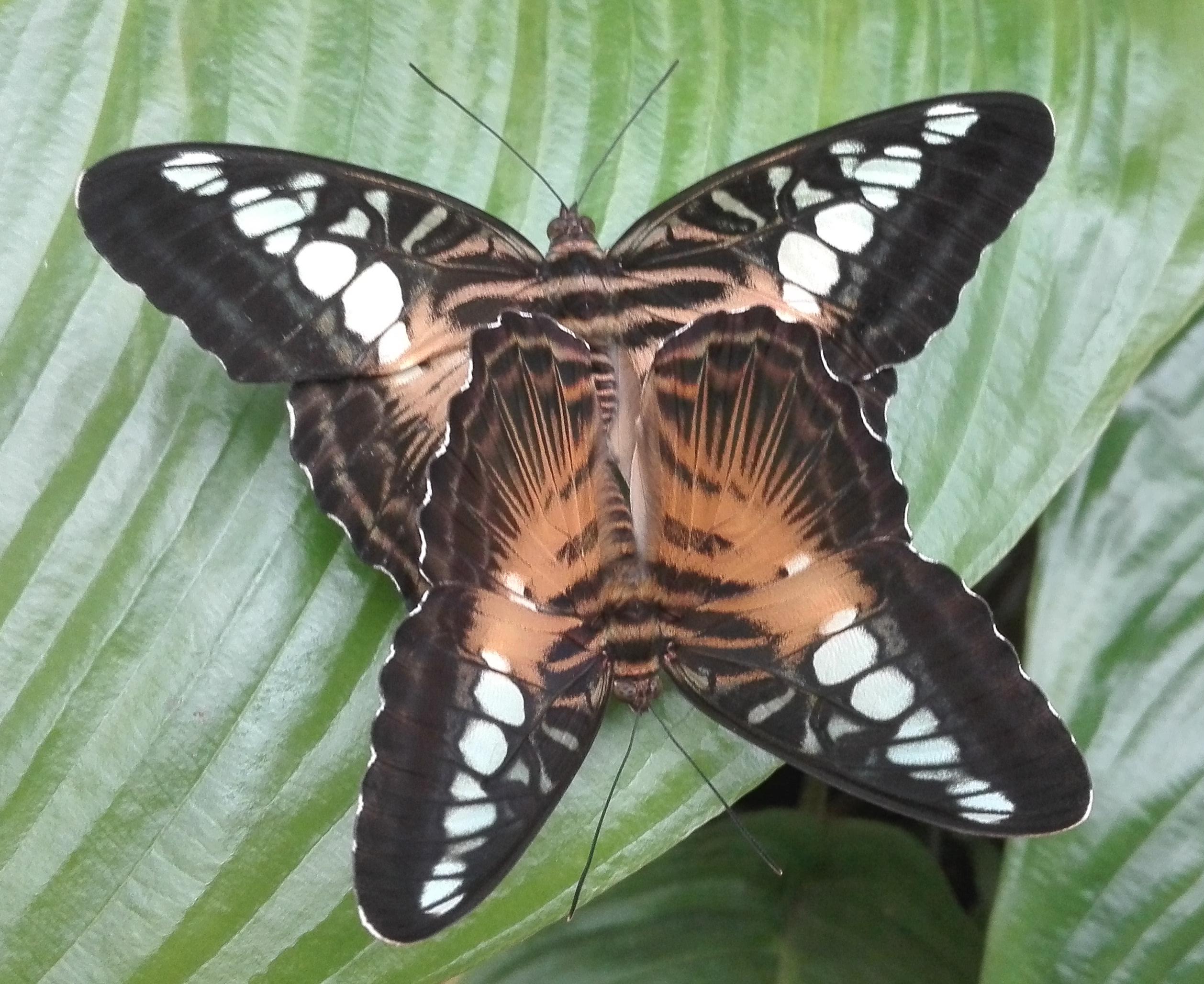 Deux papillons