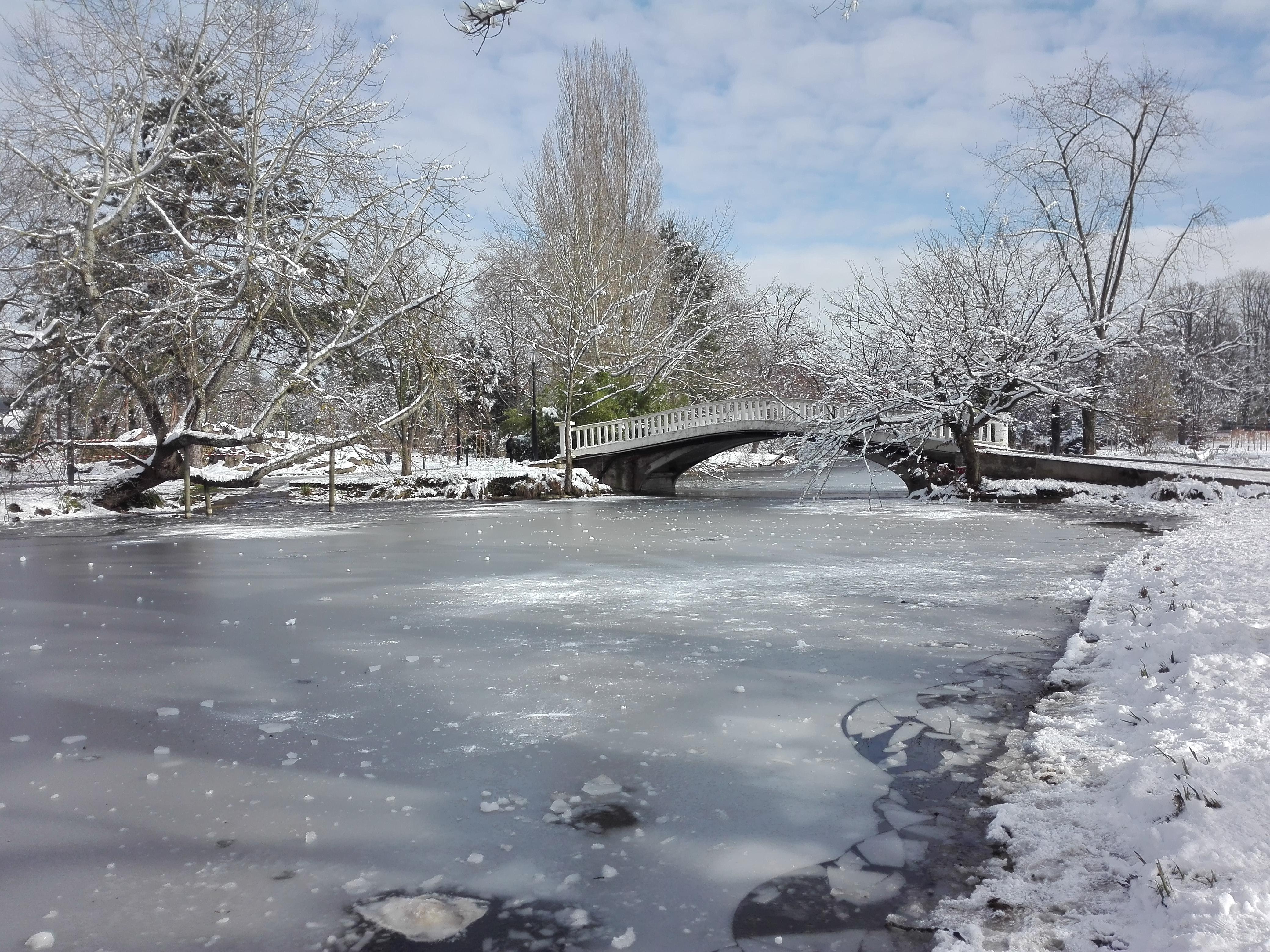 Les Ibis gel et neige 02 2018
