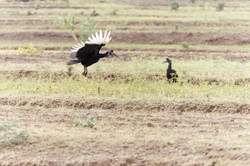 Ethiopie oiseau 2