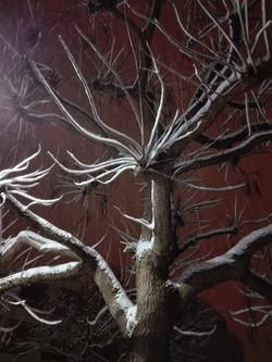 Le Pecq arbre soir sous la neige 02 2018