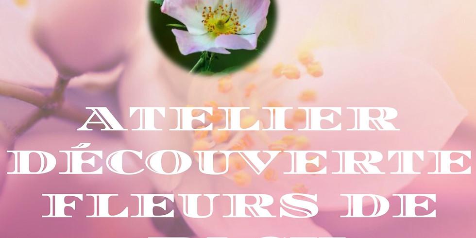 ATELIER DÉCOUVERTE FLEURS DE BACH