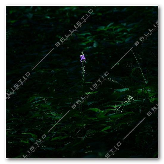 Lonesome Wildflower