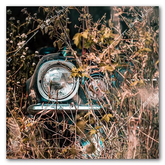 Abandoned Camaro