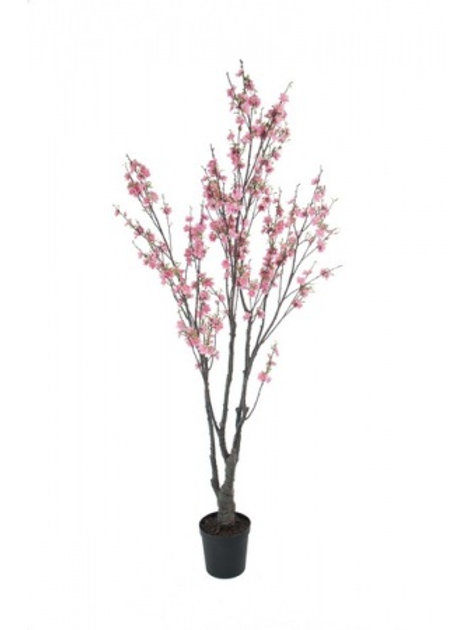 Kirsebærtræ, 180 cm / Cherry tree, 180 cm