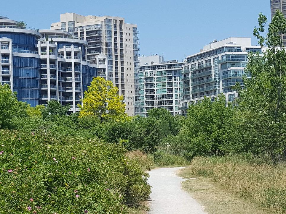 Walk 20 Sunnyside SANDY STROLL in Toront