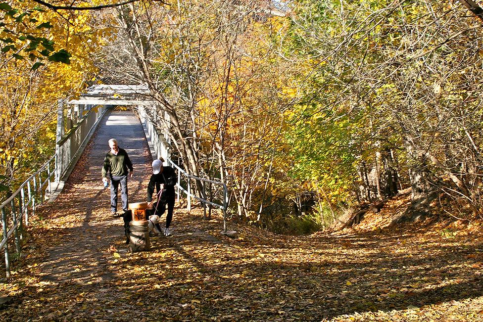 Walk 14 Rosedale Meandering Stroll 2.jpg