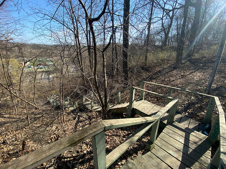 Crothers Woods' hidden staircase (194 steps!)