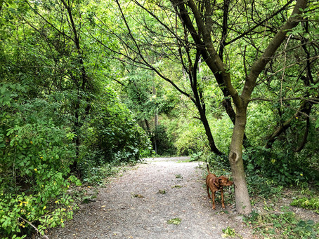 Mini-walk for dog lovers- complement for the CURIOUS minds in Toronto (around Evergreen Brick Works)