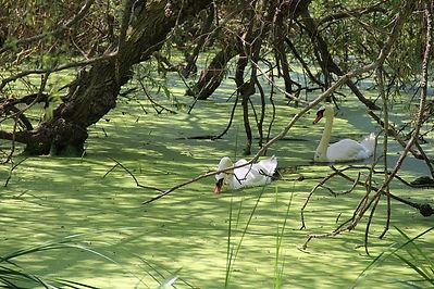 Walk 19 High Park Waterfowl Stroll 8 in