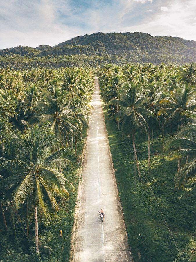 Siargao Island, Tropical Palm Trees
