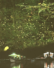 firefly bohol_edited.jpg