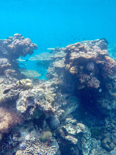 and more live corals.