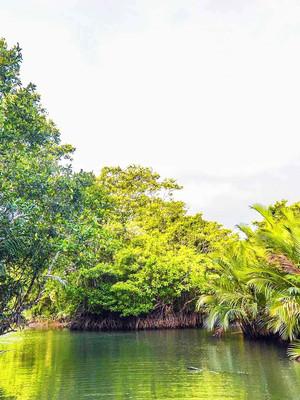 Mangrove Tour