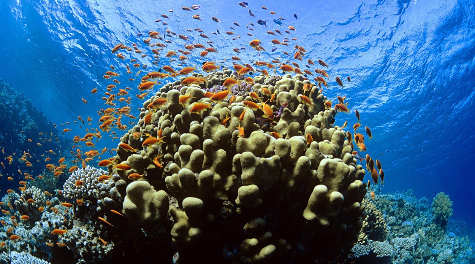 Tubbattaha Reef