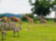 caluit safari palawan tour