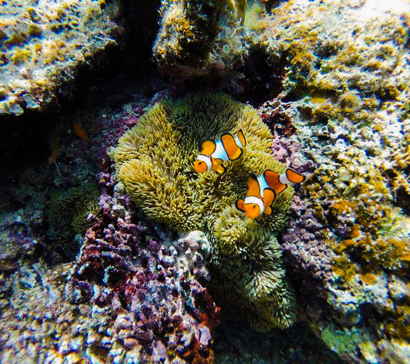 Live corals during snorkeling.