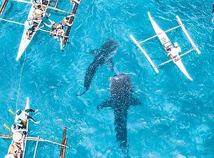 oslob whaleshark wtching tour