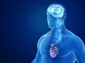 運動と脳と心