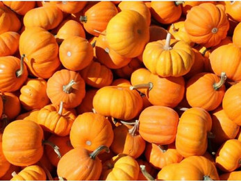 October Pumpkin Facts