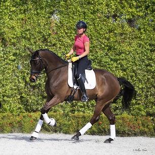 Dexter-Horse2-cant2.jpg