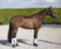 Dexter-Horse2-conf.jpg