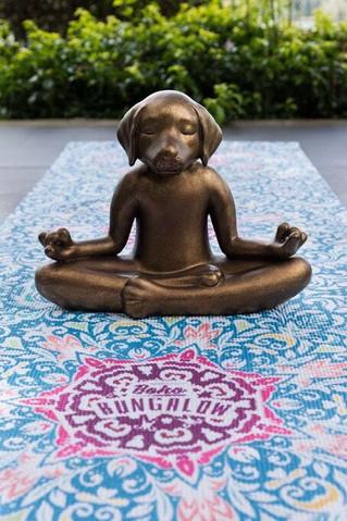 Yoga & Meditación sobre Mándalas